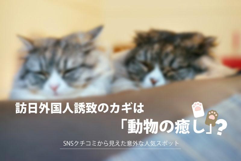 """訪日外国人誘致のカギは""""動物の癒し""""! SNSクチコミから見えた意外な人気スポット"""