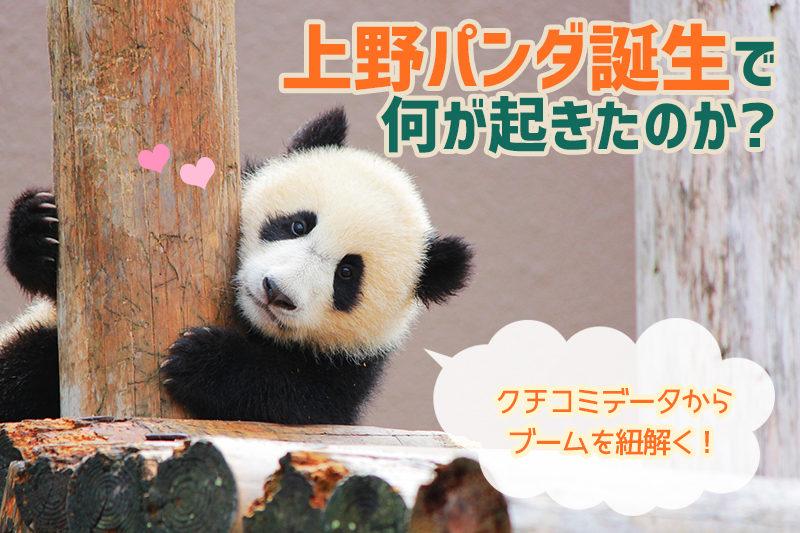 上野パンダ誕生で何が起きたのか?クチコミデータからブームを紐解く!